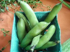 csa share july 10th fava beans