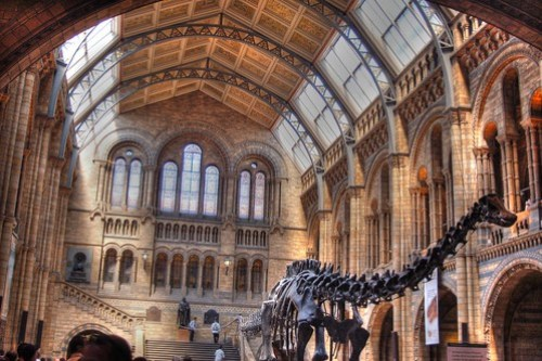 Natural History Museum Interior HDR