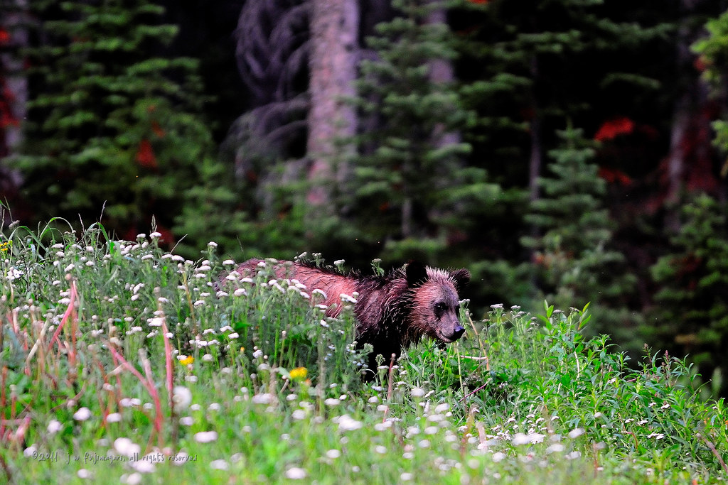 Dark Grizz Cub