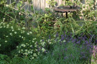 The garden II