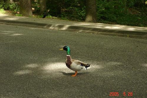Bird at UT
