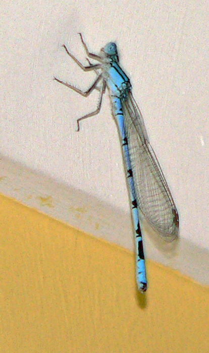 Dragonfly3