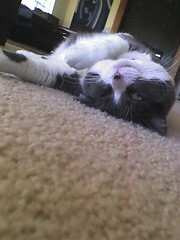 Musubi rolling on carpet
