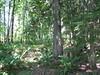 Cedar Forest (part 2)