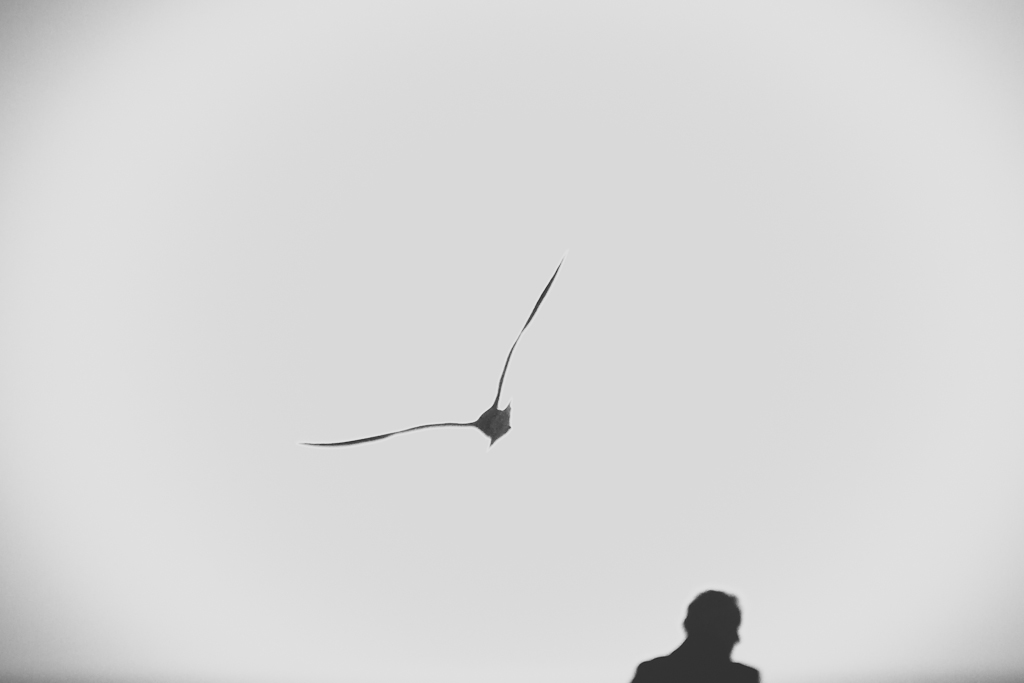Bird - Man