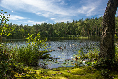 Bevardis ežeras