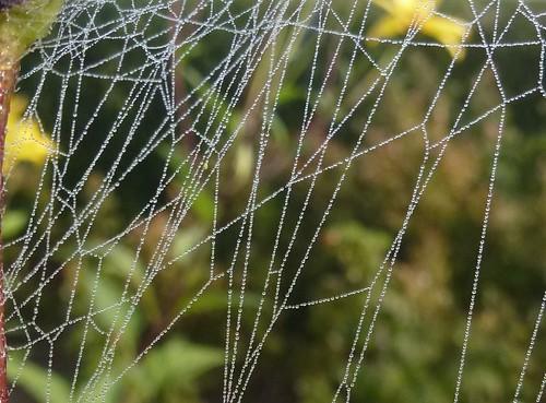 Spindelvæv efter tåge
