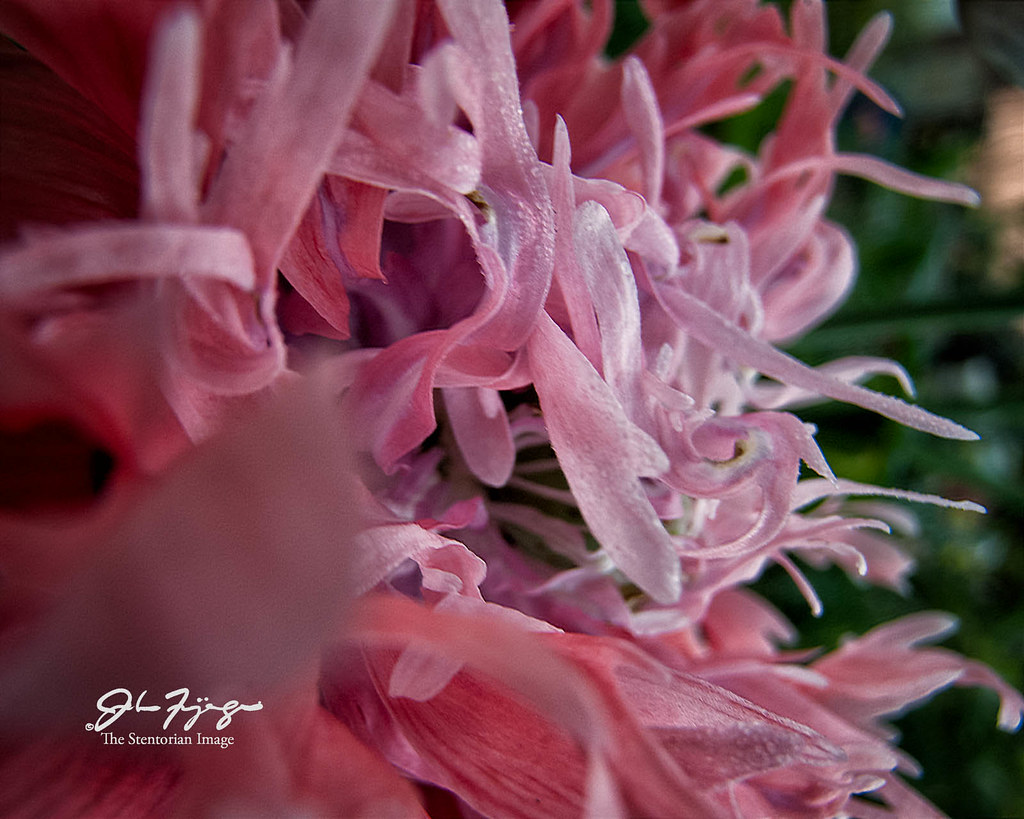 Frilly Flower