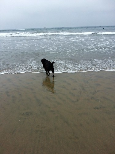 Doggie Beach_772013_6