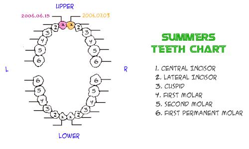 Summertooth950703