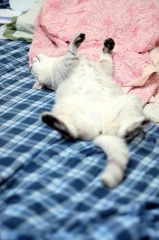 Sleeping Kitty_5978