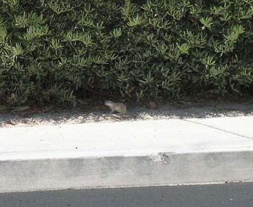 cache 2 critter