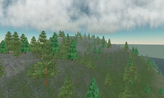 Rental Sims Forest