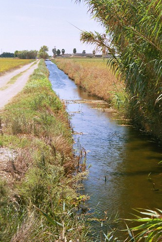 Stream by the delta