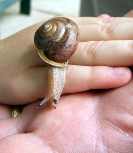 snail 6