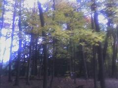 trees1 - fall walk