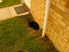Ebony Sitting by the Door