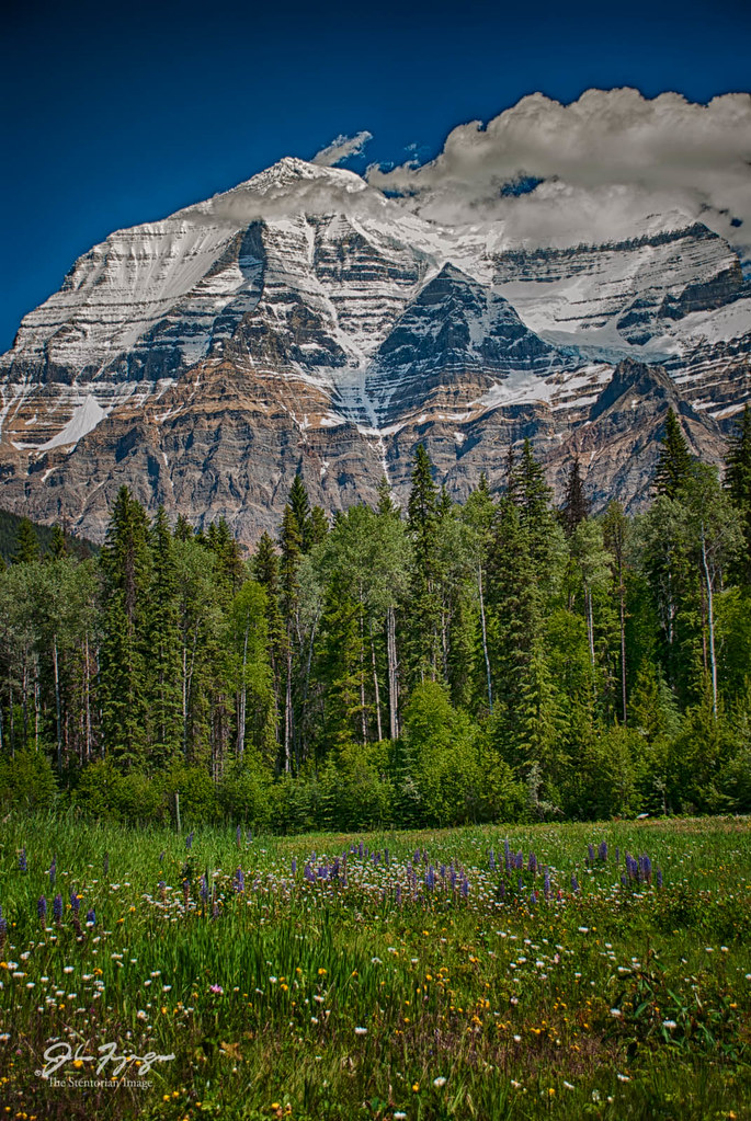 Mt.Robson & Meadow