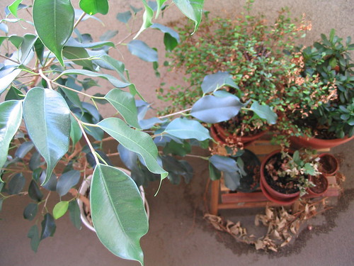 My paltry patio garden