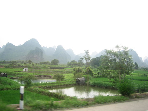Guilin rice fields