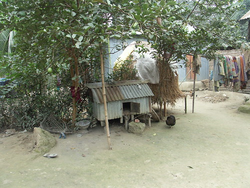 Grameen also helps in small house hold chicken farm