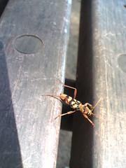 unid bug
