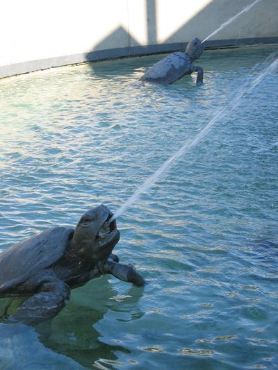 spitting turtles!!!!