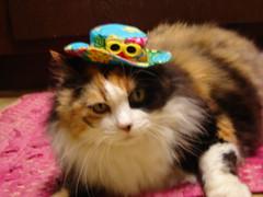Fiesta Kitty