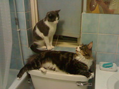 cats-bathroom