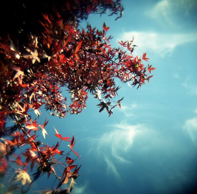Autumn red above my head