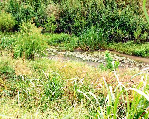 mustang bayou - 0117