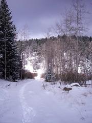 Trekking through the snow.