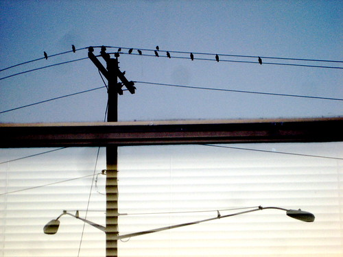 Reflection of Birds on Wire and Telephone Pole