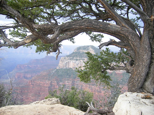 Juniper Tree frames the North Rim