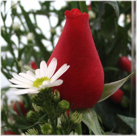 roses_detail