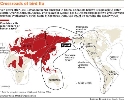 Where is... Kipnuk and H5N1