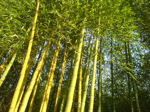 Bamboo Trees Remix
