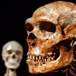 Just 7% of our DNA is unique to modern humans, study shows 💥💥