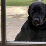 Ring video shows dog trying to find his owner in the 2-way talk doorbell 💥💥