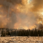Wildfire smoke exposure linked to COVID-19 case increase: study 💥💥