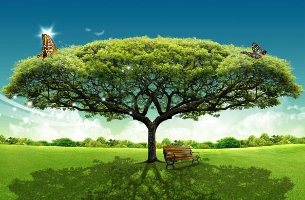 Scenery Wide Tree free psd background 3500x2300