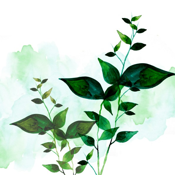 psd_layered watercolor green leaves