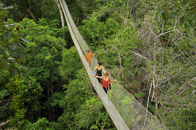 Full Day Canopy Walkway Thumbnail