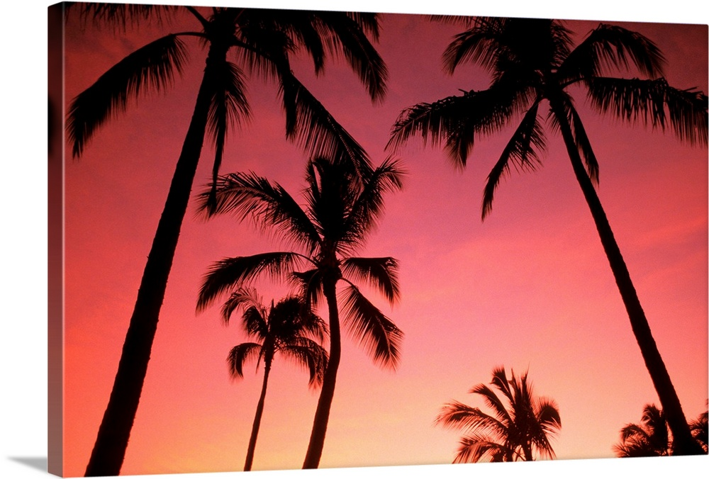 Hawaii, Silhouette Of Palm Trees At Sunset, Pink Sky Wall