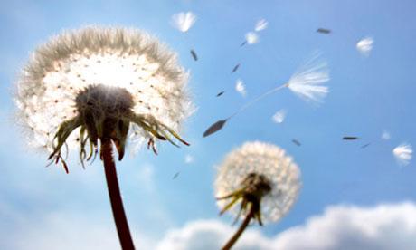 https://i1.wp.com/static.guim.co.uk/sys-images/Books/Pix/pictures/2013/6/17/1371473810666/Dandelion-seeds-in-flight-010.jpg