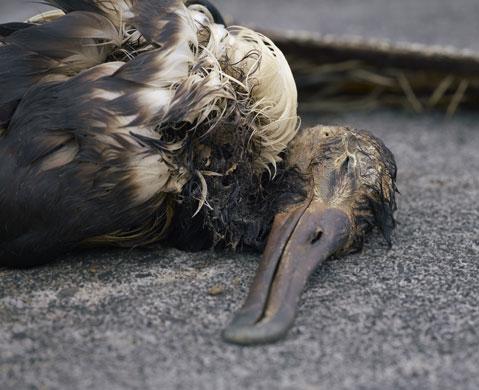 albatross-gluttony-005.jpg