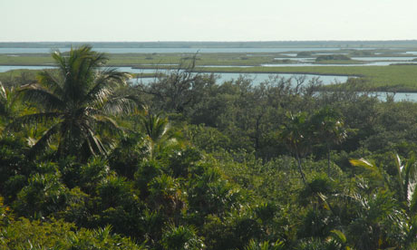 Cancún climate change summit: Mangrove forest in Cancún. Photograph: Jenny Bates