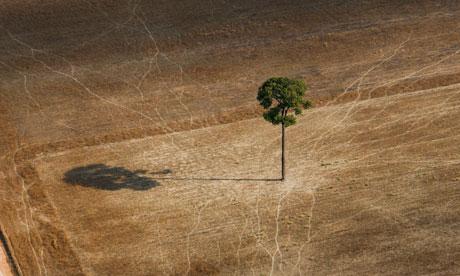 Biodiversity in focus : deforestation in Brazil