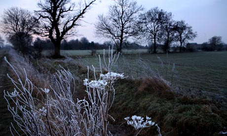 Graham Turner for Green shoot : A heavy frost on plants in a field in Suffolk