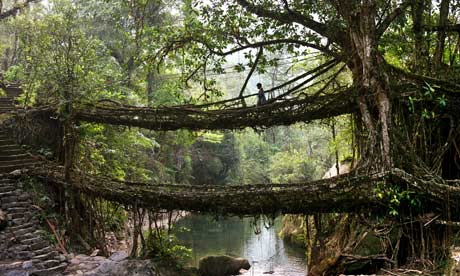 The living tree root bridges of Cherrapunji, Meghalaya, India - 2011